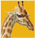 giraffe_clear